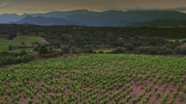 vídeos y material grabado en eventos de stock de vista aérea del valle del viñedo al atardecer - panorámica
