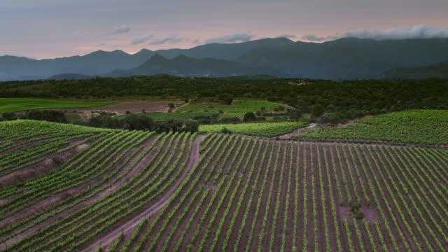 vídeos y material grabado en eventos de stock de vista aérea de los viñedos al atardecer - panorámica