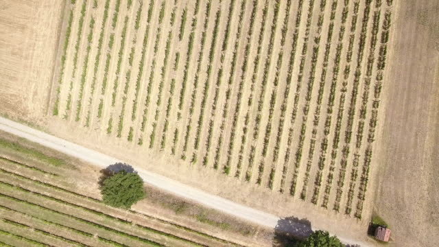 aerial view of vineyards in piedmont - italy - pjphoto69 stock videos & royalty-free footage