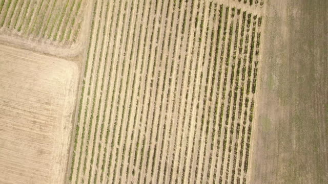 vídeos y material grabado en eventos de stock de vista aérea de viñedos en el piamonte - italia - pjphoto69