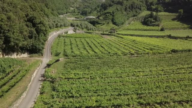 ブドウ畑の風景の空中写真 - トレンティーノ点の映像素材/bロール