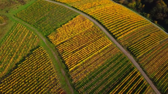vídeos de stock e filmes b-roll de aerial view of vineyards near ayl in autumn, saar river, saar valley, rhineland-palatinate, germany - geografia física