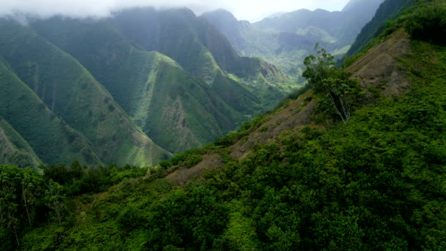 aerial view of volcanic cliffs valley rainforest maui - hawaii inselgruppe stock-videos und b-roll-filmmaterial
