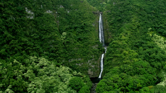aerial view of waterfall rainforest vegetation on maui - polynesian ethnicity stock videos & royalty-free footage