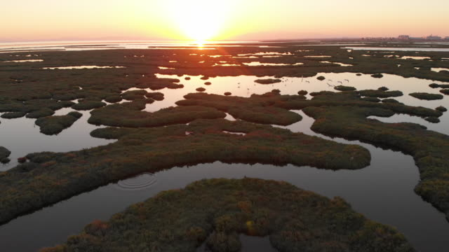 aerial view of wetland and flamingos during sunset - wide stock videos & royalty-free footage