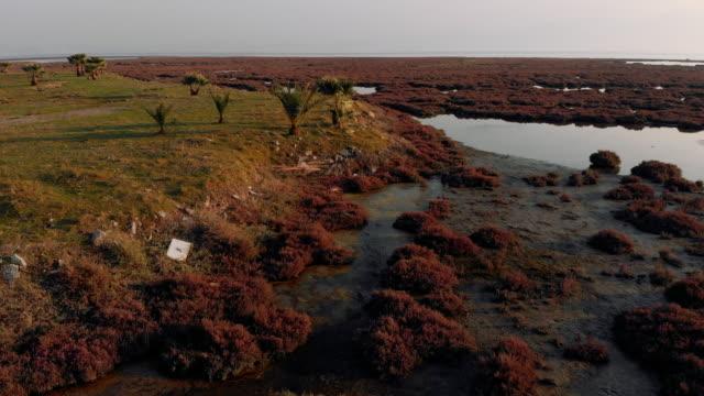 aerial view of wetland - wetland stock videos & royalty-free footage