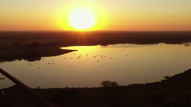 vídeos de stock, filmes e b-roll de vista aérea das zonas úmidas no pantanal, brasil - savana