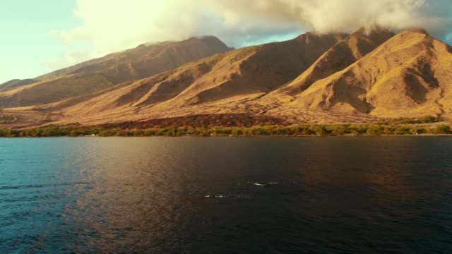 aerial view of whales swimming off the coast of the west maui mountains and pali highway - cetacea video stock e b–roll