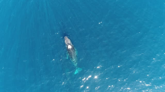 aerial view of whales - breaching stock videos & royalty-free footage