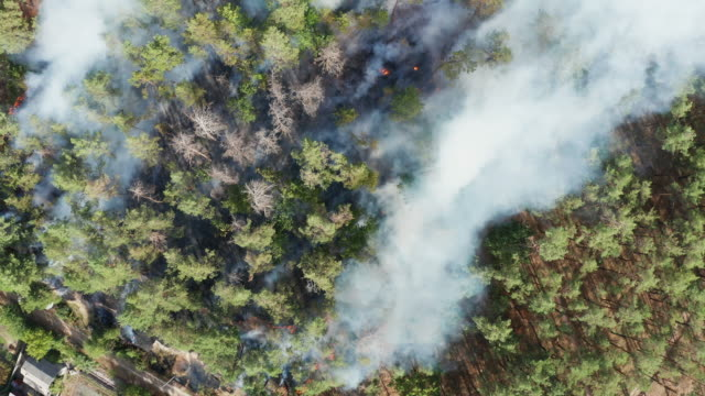 aerial view of wildfire in forest. burning forest and huge clouds of smoke - burnt stock videos & royalty-free footage