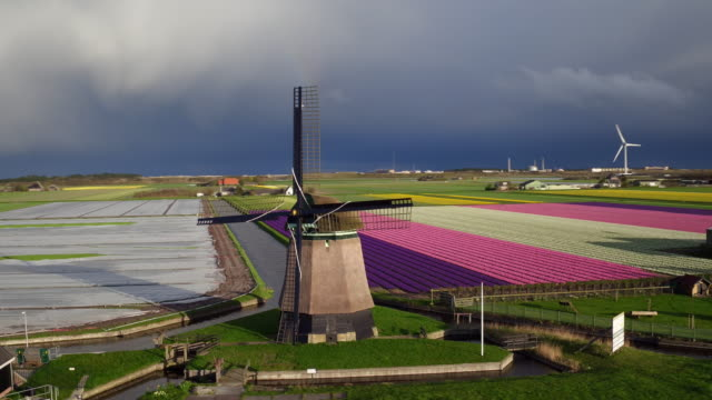stockvideo's en b-roll-footage met luchtfoto van de wind power en tulpen veld in nederland - nederland