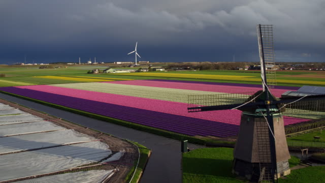 aerial view of wind power and tulips field in holland - mill stock videos & royalty-free footage