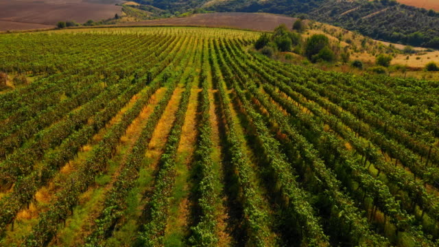 aerial view of winery landscape - vineyard stock videos & royalty-free footage