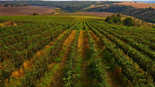 aerial view of winery landscape - valley stock videos & royalty-free footage
