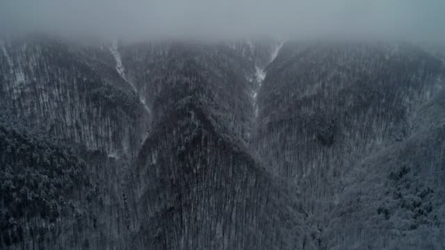 Aerial view of winter mountains in fog, over white snow-covered forests