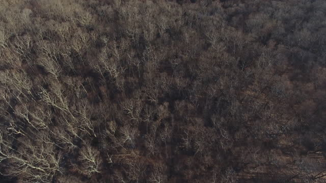 aerial view of winter woodland - bare tree stock videos & royalty-free footage