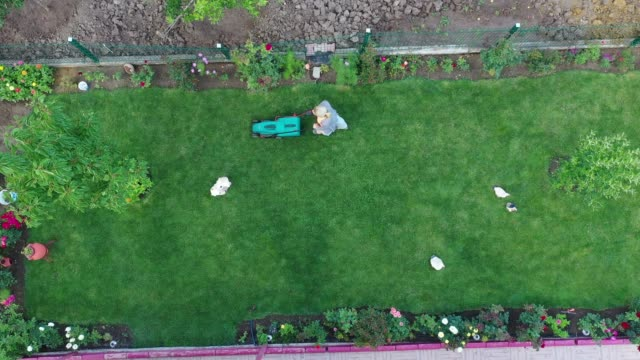 aerial view of woman cut the flower garden with an electric mower - domestic garden stock videos & royalty-free footage