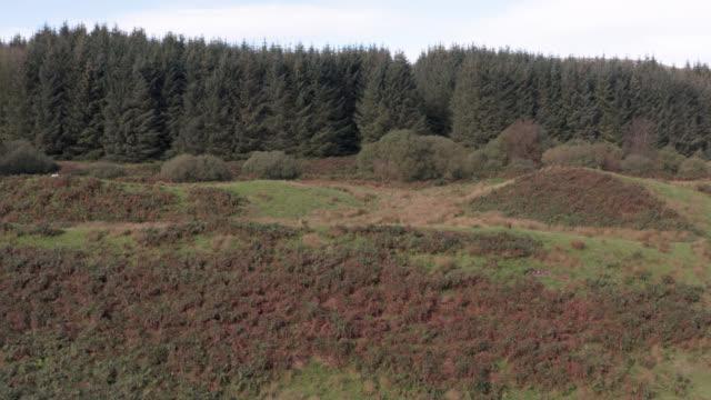 vídeos y material grabado en eventos de stock de vista aérea de la zona boscosa de la escocia rural en verano - johnfscott