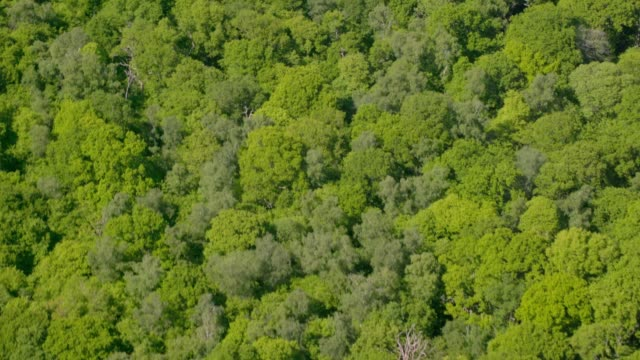 Aerial View of Woodland in Sunshine. 4K