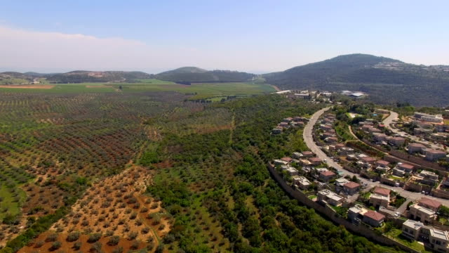 Aerial view- Olive groves of the galilee