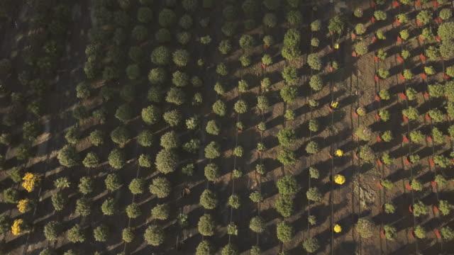 aerial view on a botany garden - centro per il giardinaggio video stock e b–roll