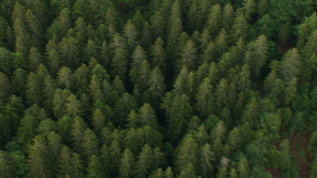 HD: Aerial view on a dense forest