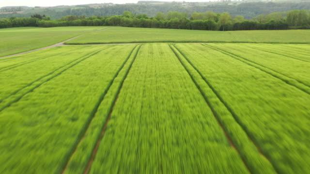 stockvideo's en b-roll-footage met aerial view on a green filed - achterstevoren