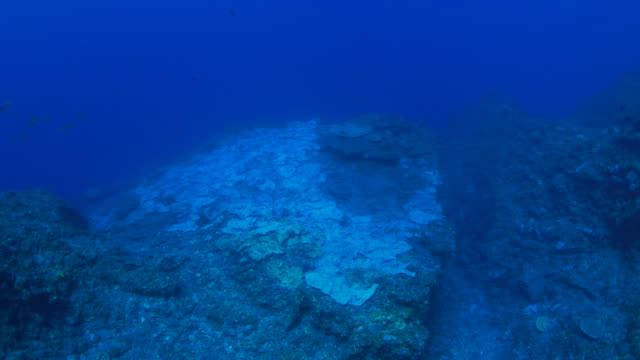 Luchtfoto op koraal rif in diepe zee met zachte koraal