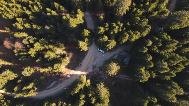 aerial view on exploring spruce forest with a car - moving past stock videos & royalty-free footage
