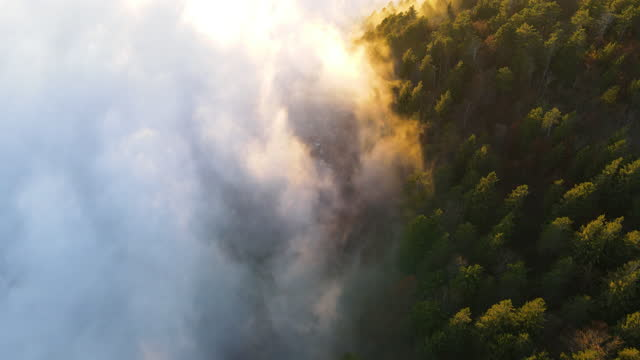 aerial view on fog mixing with pine woodland - pine woodland stock videos & royalty-free footage