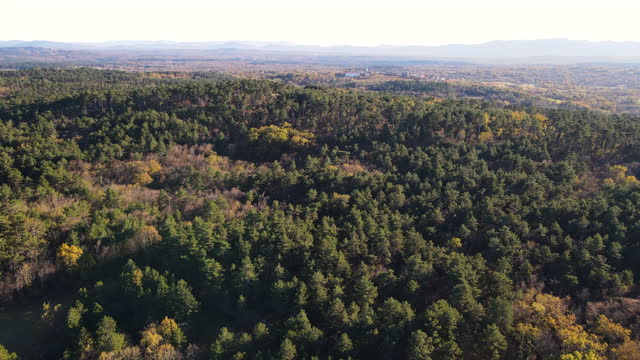 aerial view on pine woodland - pine woodland stock videos & royalty-free footage