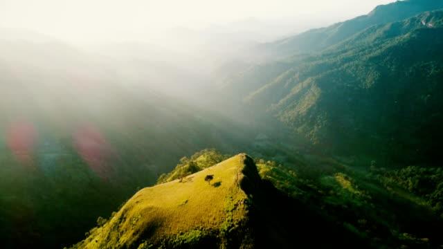 スリランカの紅茶プランテーションの空中写真 - プランテーション点の映像素材/bロール
