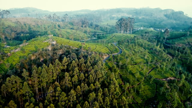 aerial view on tea plantation in sri lanka - sri lanka stock videos and b-roll footage