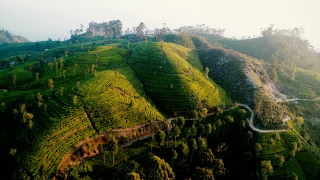 aerial view on tea plantation in sri lanka - sri lanka stock videos & royalty-free footage