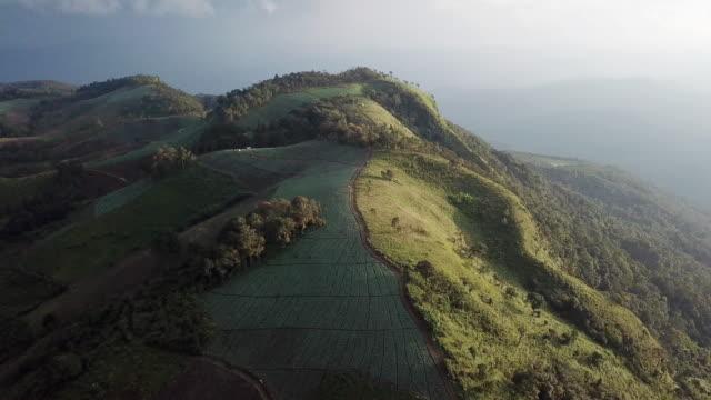 luftbild auf berg - tropical climate stock-videos und b-roll-filmmaterial