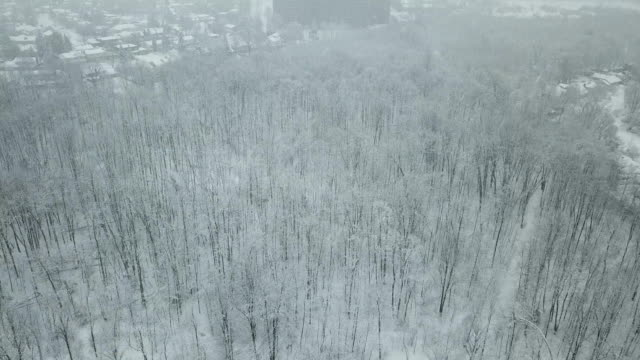 aerial view on winter forest - natural pattern stock videos & royalty-free footage