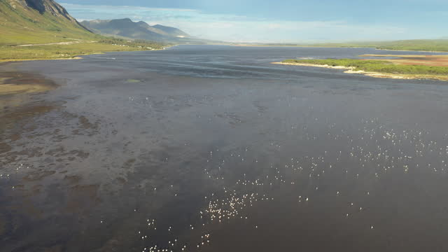 aerial view over a flamboyance of flamingos in the river - hermanus stock videos & royalty-free footage