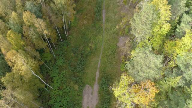 aerial view over a footpath in a forest - scandinavia stock videos & royalty-free footage