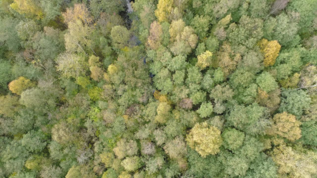 aerial view over a forest in an autumn landscape - viewpoint stock videos & royalty-free footage