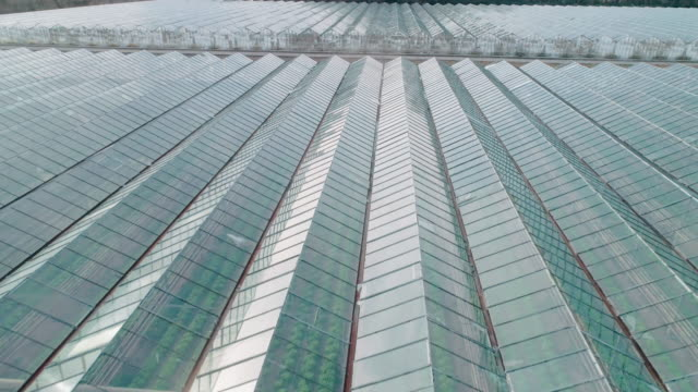 aerial view over a greenhouse in springtime on a sunny day. agriculture and gardening. breeding vegetables in a glass house. plant care. - greenhouse stock videos & royalty-free footage