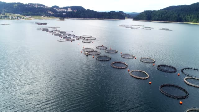 aerial view over a large fish farm with lots of fish enclosures. - fishing stock videos & royalty-free footage