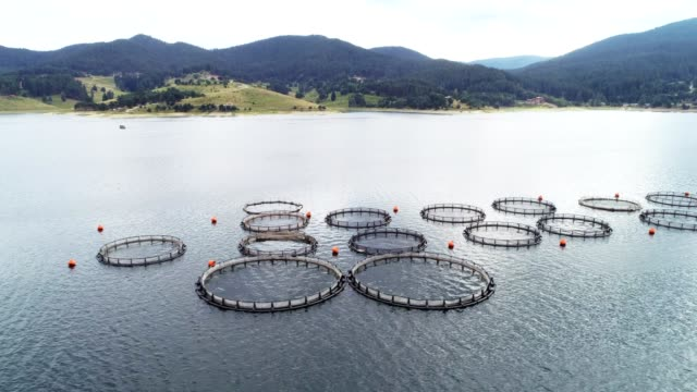 aerial view over a large fish farm with lots of fish enclosures. - sustainable tourism stock videos & royalty-free footage