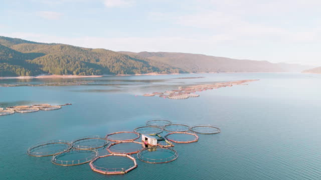aerial view over a large fish farm with lots of fish enclosures. - fishing boat stock videos & royalty-free footage