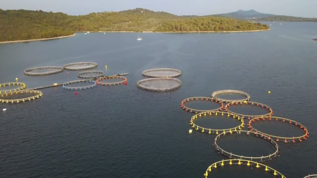 aerial view over a large fish farm with lots of fish enclosures - sustainable tourism stock videos & royalty-free footage