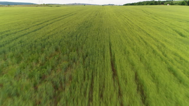 aerial view over a oilseed rape agricultural field, speed motion, blossoming colza flowers, harvest, yellow colour, - sunny stock videos & royalty-free footage