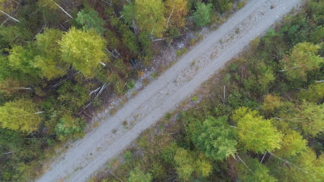 aerial view over a road in a forest - viewpoint stock videos & royalty-free footage