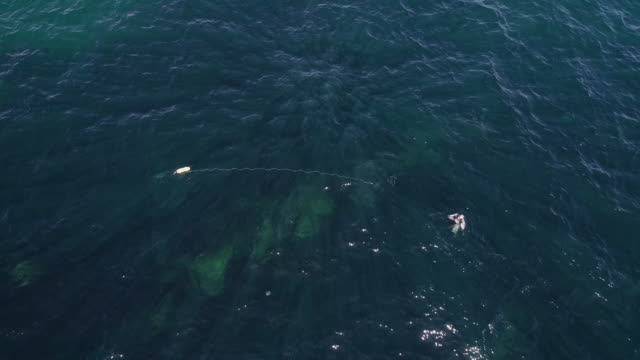 aerial view over a scuba diver. flying over a fisherman in the sea, harpooning, rising up from the water surface while searching for fish. - scuba diver point of view stock videos & royalty-free footage