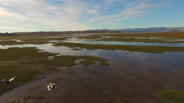 Aerial view over a swamp with ducks flying at Patagonia, Argentina
