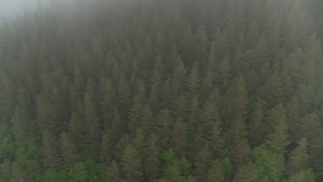 aerial view over black forest, germany - baden wurttemberg stock videos and b-roll footage