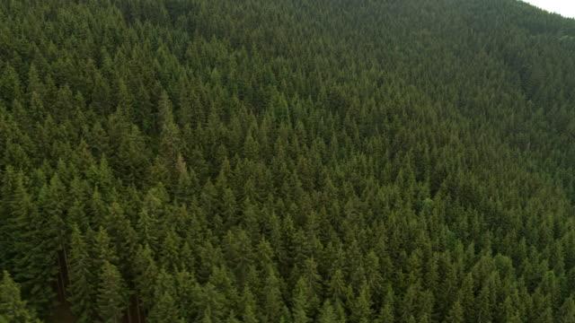 ドイツの黒い森を空撮 - バーデン・ビュルテンベルク州点の映像素材/bロール